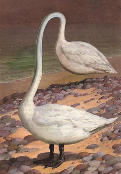 'Swan of Cellardyke', 2006, cover illustration for Bird of the Devil