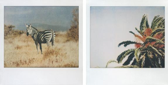 'Untitled #62' and 'Untitled #39', polaroid, 2009