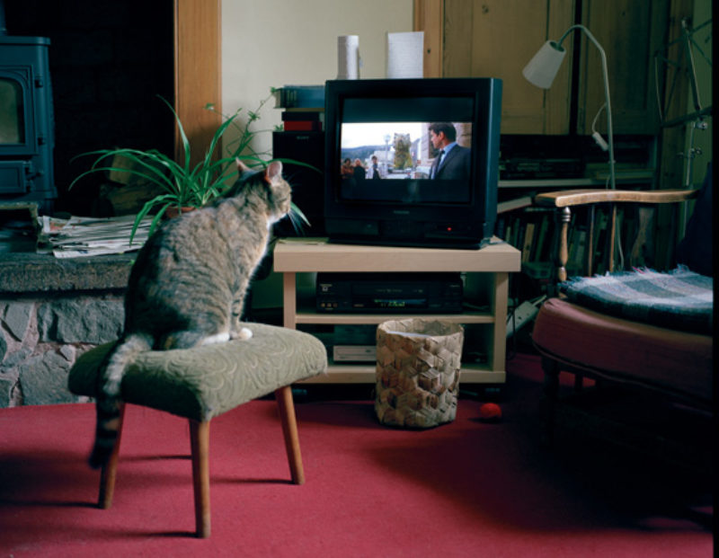 'CAt looks at dog/Jeff Koons sculpture/James Bond movie/TV', 2008, c-print
