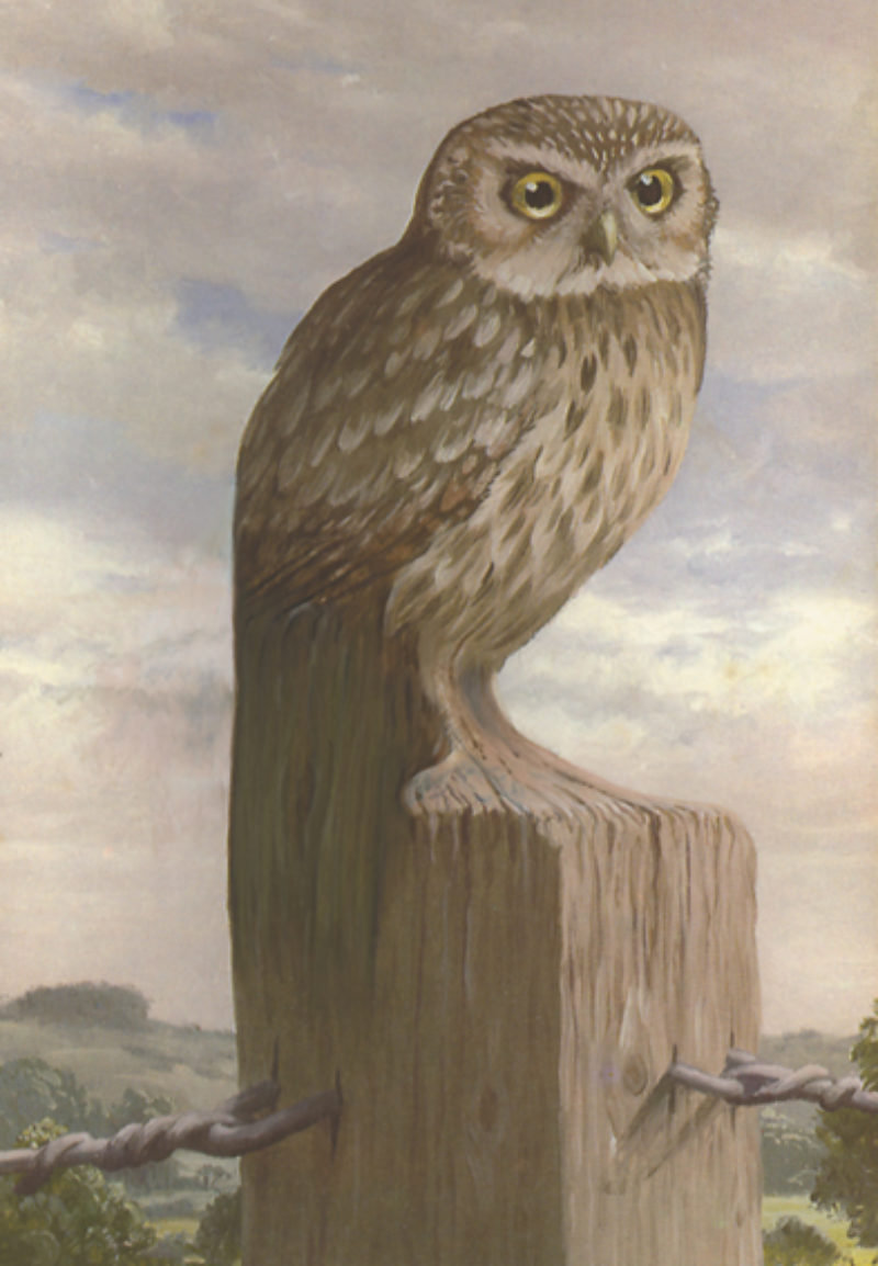'Sentry Owl' (Stickit Houletut), 2006. Legend in book written by James Robertson