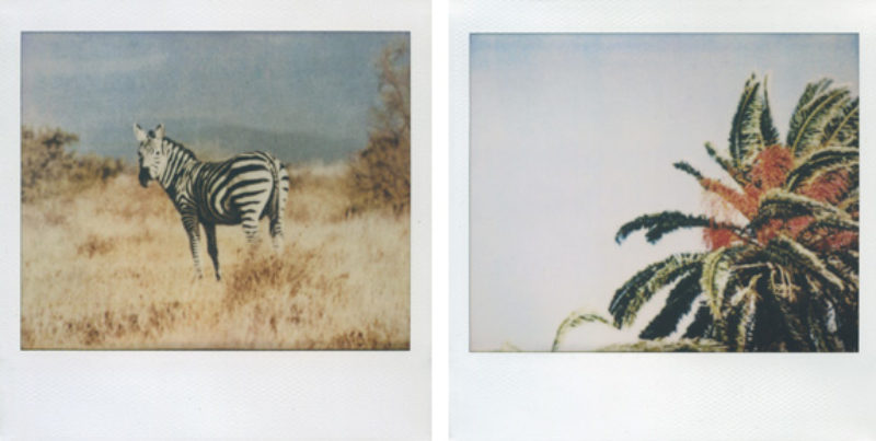 'Untitled #62' and 'Untitled #39', polaroid, 2009