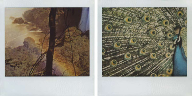 'Untitled #37' and 'Untitled #61', polaroid, 2009