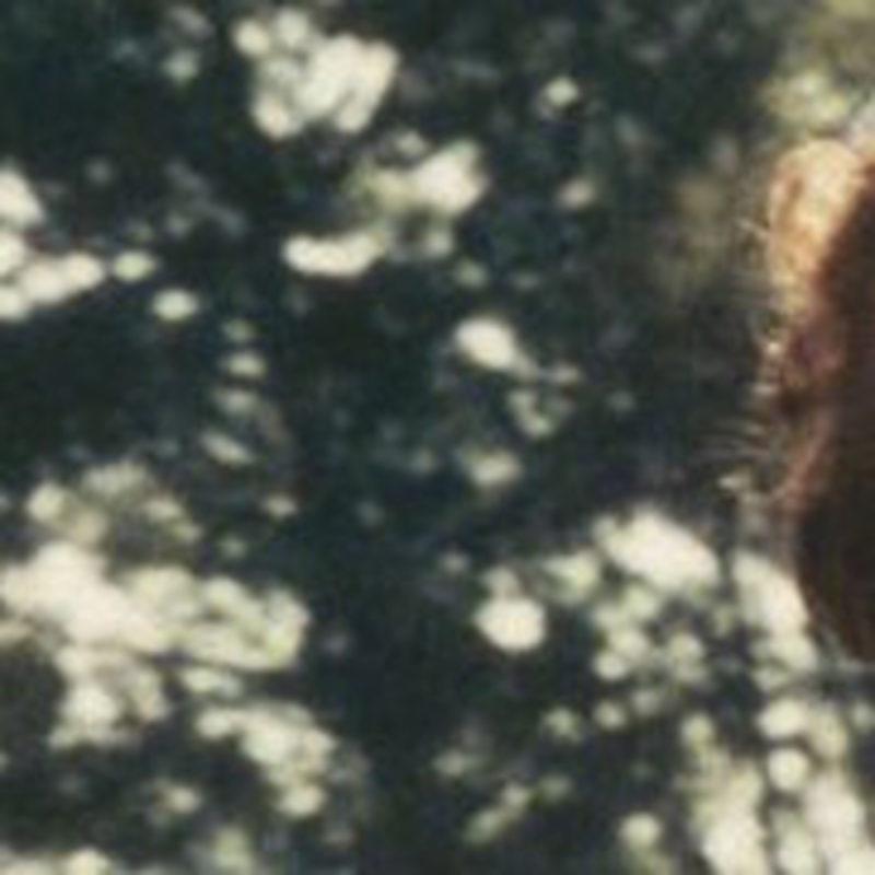 Closeup  Sylvia Kristel  Manonde Boer2